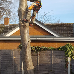 EARTH TREE SERVICES